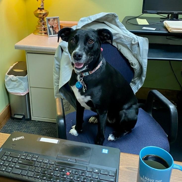 Suzy Q Chief Operating Dog
